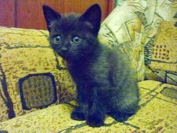 Как назвать черного кота: список кличек, имен для мальчиков и девочек