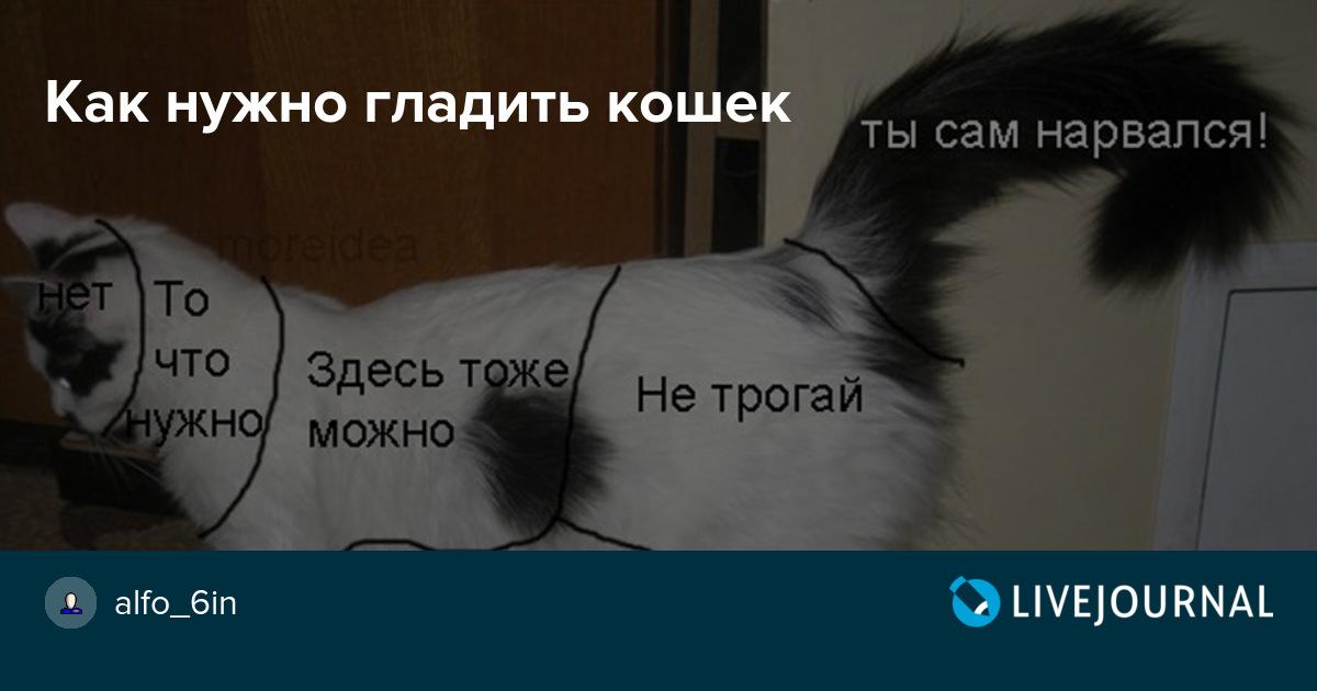 В каком месте кошки любят, чтобы их гладили