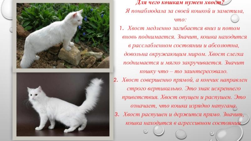 Частое дыхание у кошки