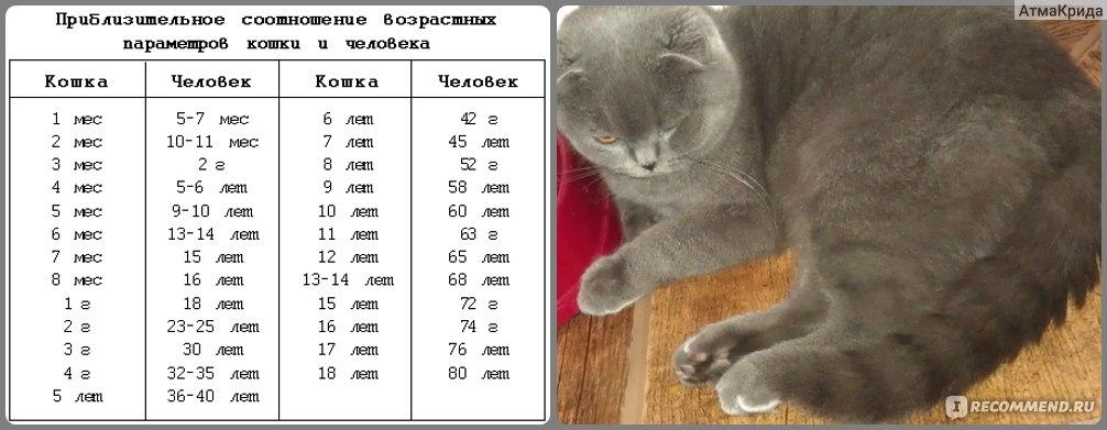 Как определить возраст кошки по глазам, по зубам, весу, шерсти, по человеческим меркам