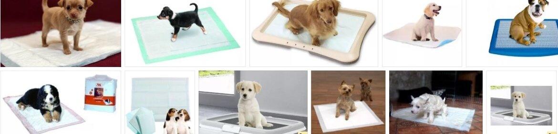 Как приучить щенка ходить на пеленку: инструкция и советы