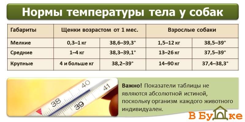 Температура тела у домашних животных в норме - мнение ветеринарного врача казакова а.а.