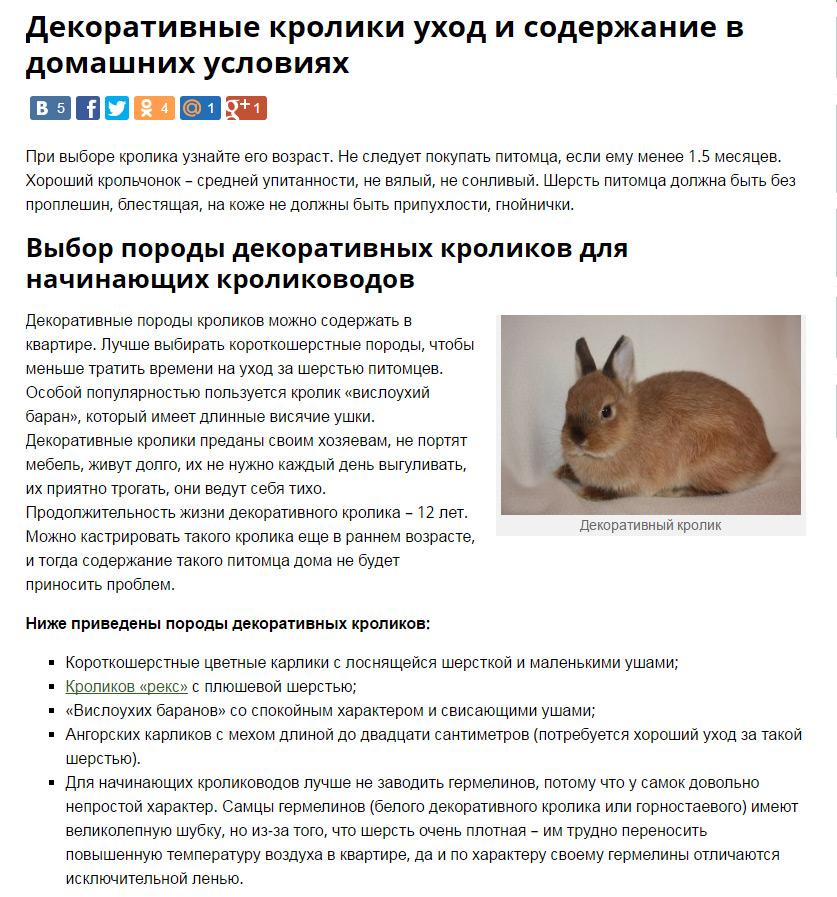 Сколько лет живут декоративные кролики в домашних условиях
