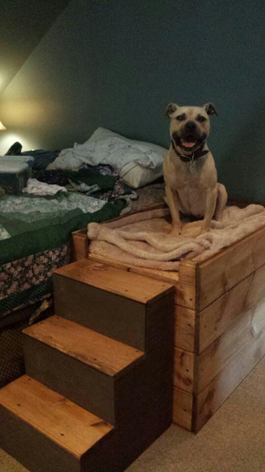 Как отучить собаку спать на вашей кровати