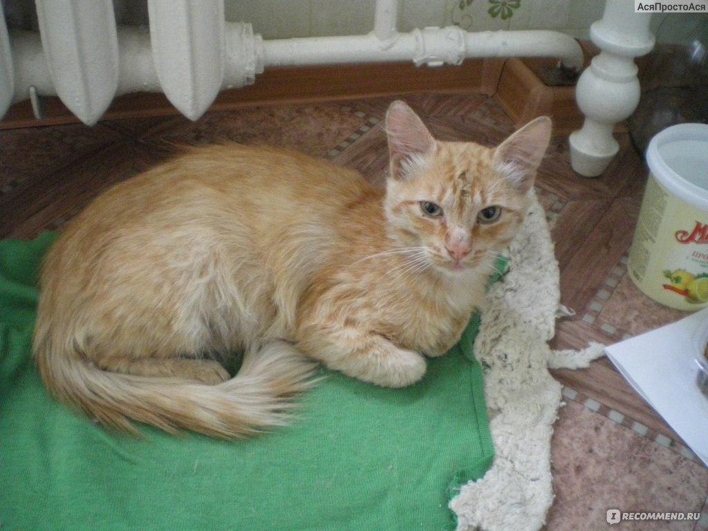 Как определить породу кошки по окрасу и другим внешним признакам