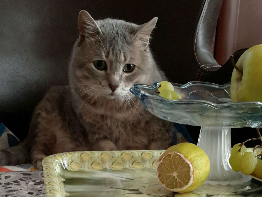 Запахи, которые отпугивают кошек