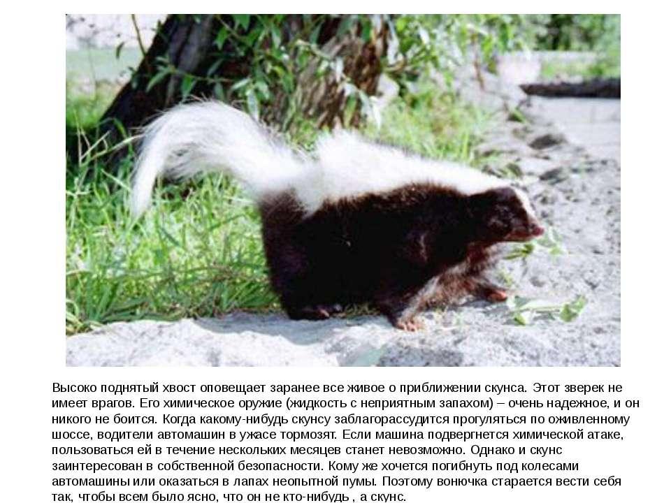 Хищные семейства куньих: представители и их описание (фото)