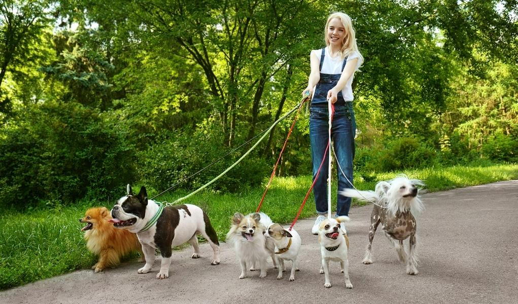 Когда можно начинать гулять со щенком во сколько месяцев как долго