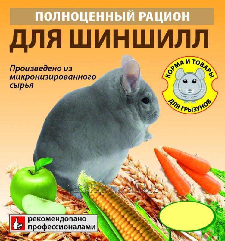 Чем можно и нельзя кормить шиншиллу. списки полезных и вредных продуктов
