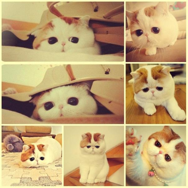 Самый красивый котенок – 30 фото