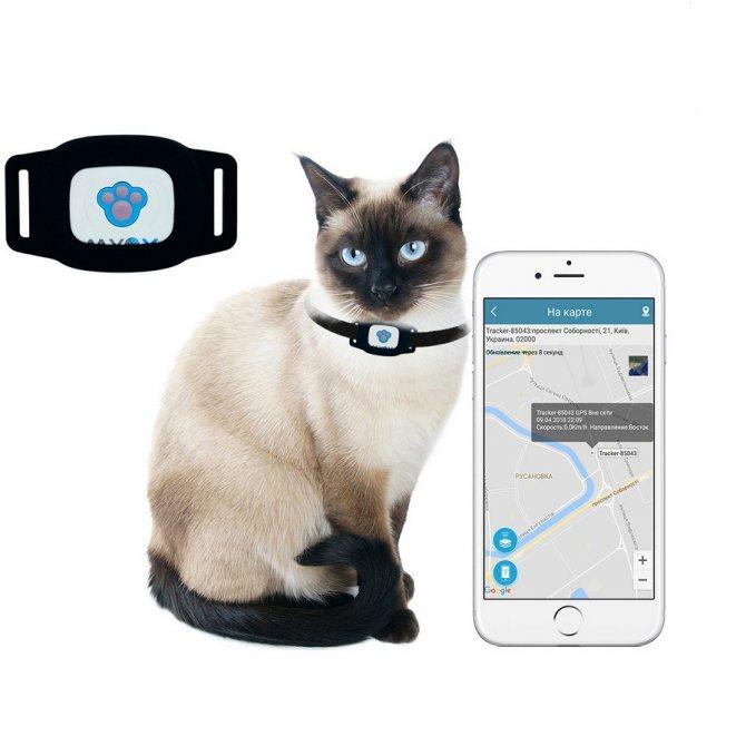 Умный gps трекер для собак и кошек   рейтинг лучших моделей