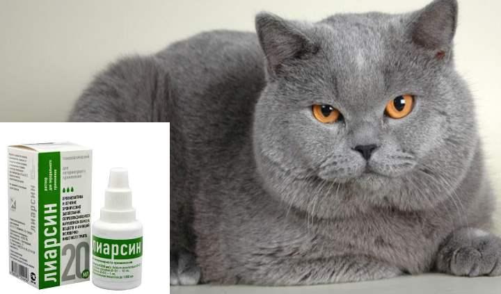 Лиарсин для кошек и котов: инструкция по применению | цена, отзывы