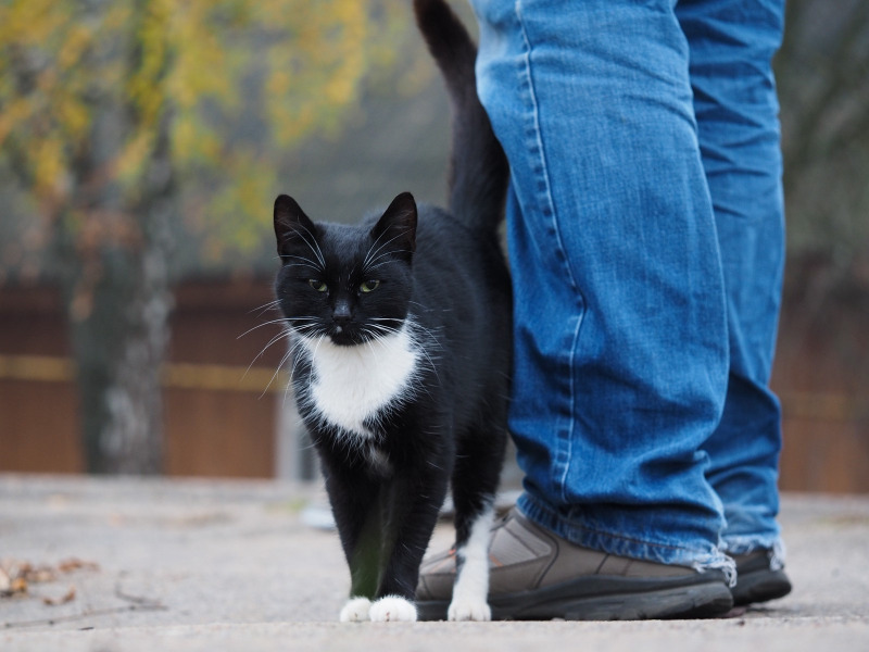 4 причины, почему кошка начала гадить где попало: что делать и как отучить - kotiko.ru