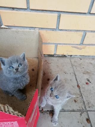 Вопросы при покупке котенка : полезные советы : животные : subscribe.ru