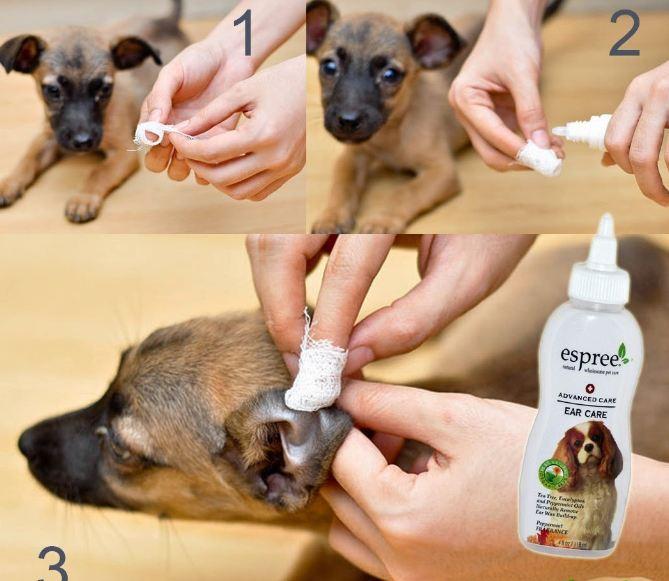 Обзор средств гигиены для собак