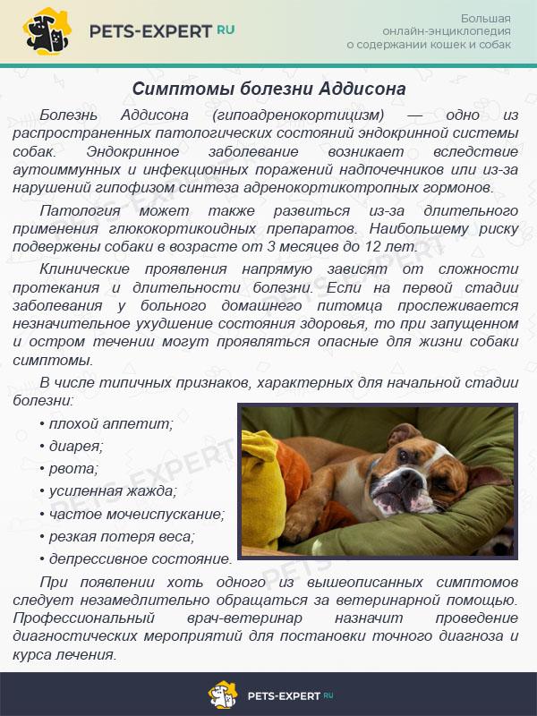 Неблагоприятные реакции на препараты у собак и кошек