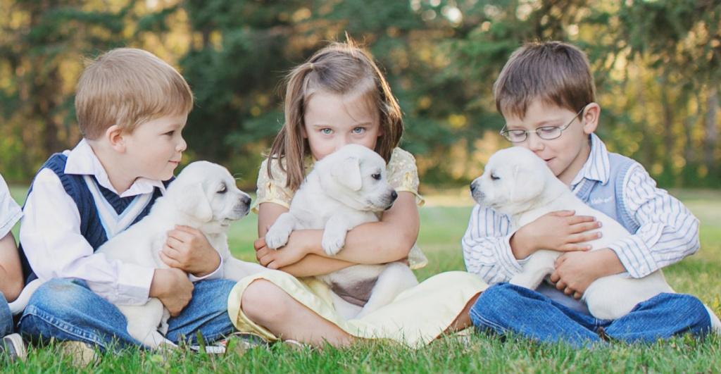 Лучшие породы собак для детей и квартиры с описанием и фото