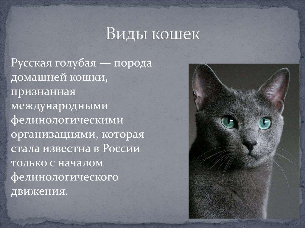 Лучшие породы кошек на 2021 год