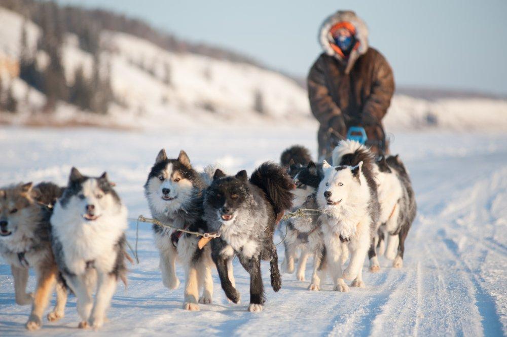 Аборигенные породы собак все