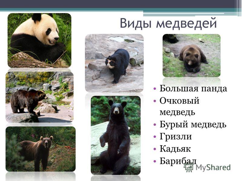 Медведь: описание, повадки, что есть, где живет, фото