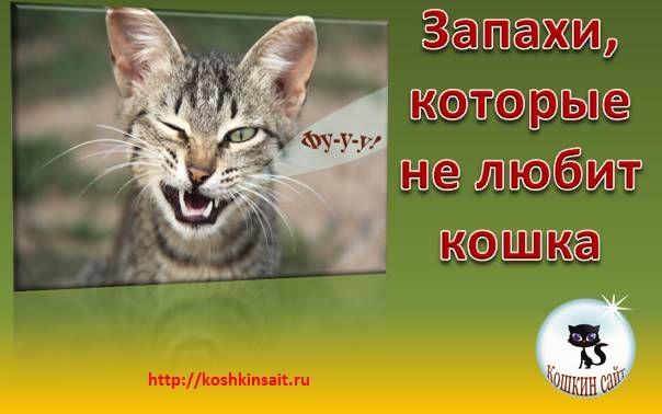 Какие запахи не любят кошки? почему коты не переносят ароматы цитрусовых и эфирных масел? какие запахи больше всего пугают животных?