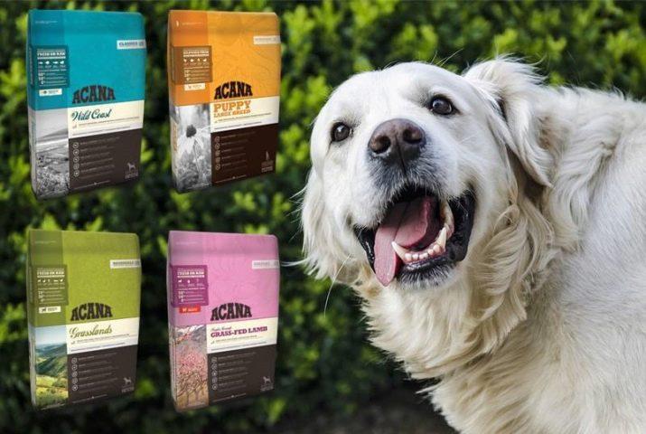 Рейтинг кормов для собак 2021 (по качеству)
