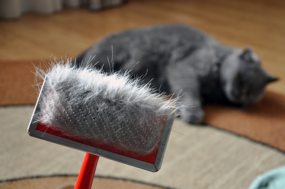 Кошка линяет сильно что делать: причины, что делать (в домашних условиях)