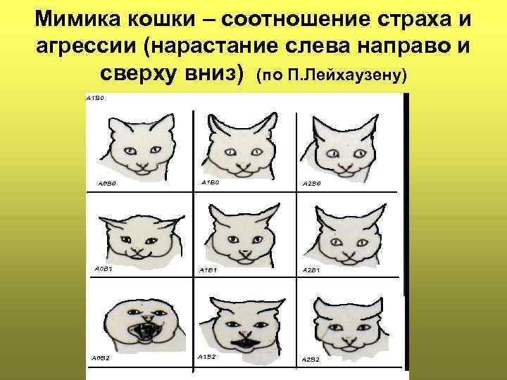 Кот-агрессор: исправляем агрессивное поведение кошки или кота