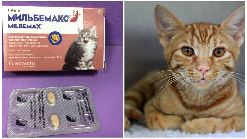 Глисты у кошек: топ 10 средств 2020 года (таблетки, капли, народные)