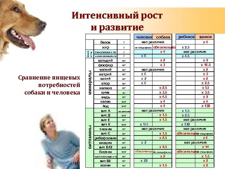 Сколько лет живут собаки и от чего это зависит?