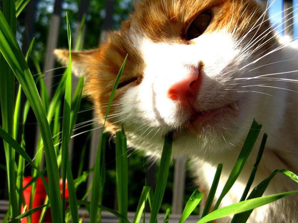 Почему кошки едят траву: топ-7 причин поедания кошкой травы