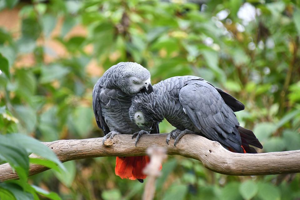 Попугай жако: фото, виды, особенности, интеллект, содержание дома