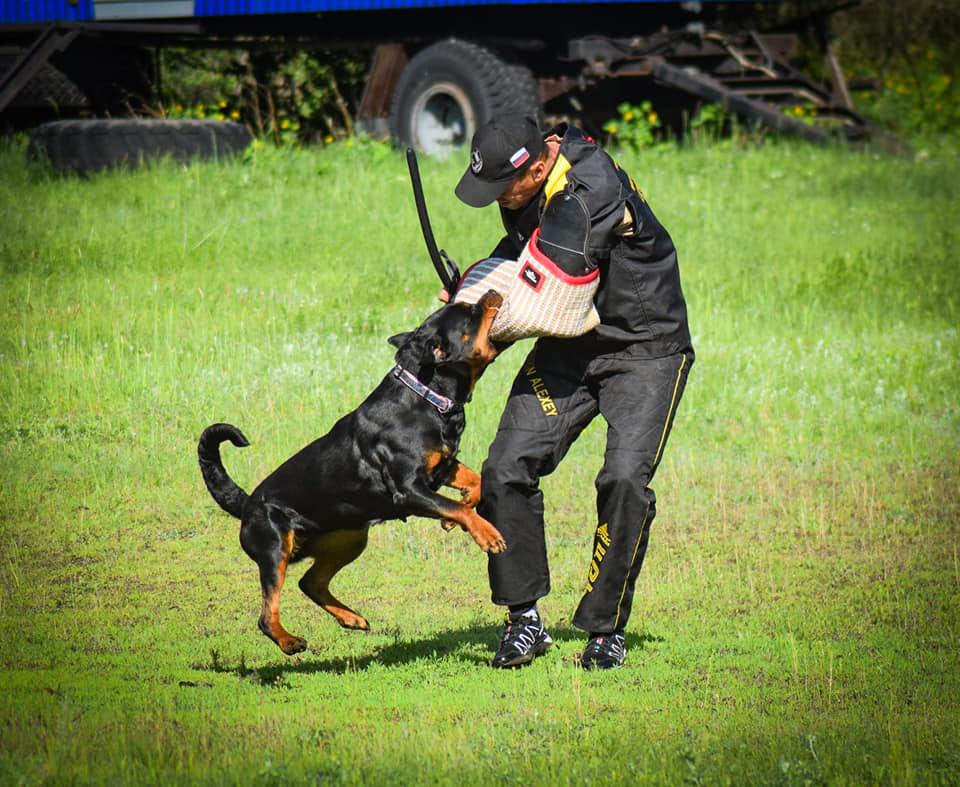 Зубастый капкан: породы собак с самым сильным укусом