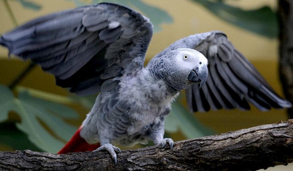 Попугай в домашних условиях: виды, фото, породы, названия, окрасы, размеры, интересные факты