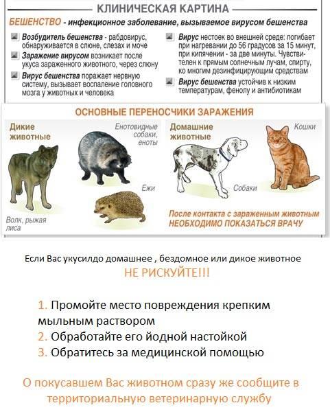 Чем можно заразиться от кошки человеку: 13 болезней, опасных для людей