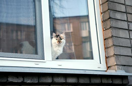 Кошка или кот в доме - приметы и суеверия