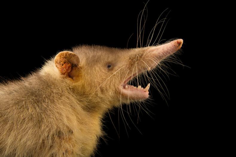 Щелезуб: фото животного, внешний вид, описание и особенности