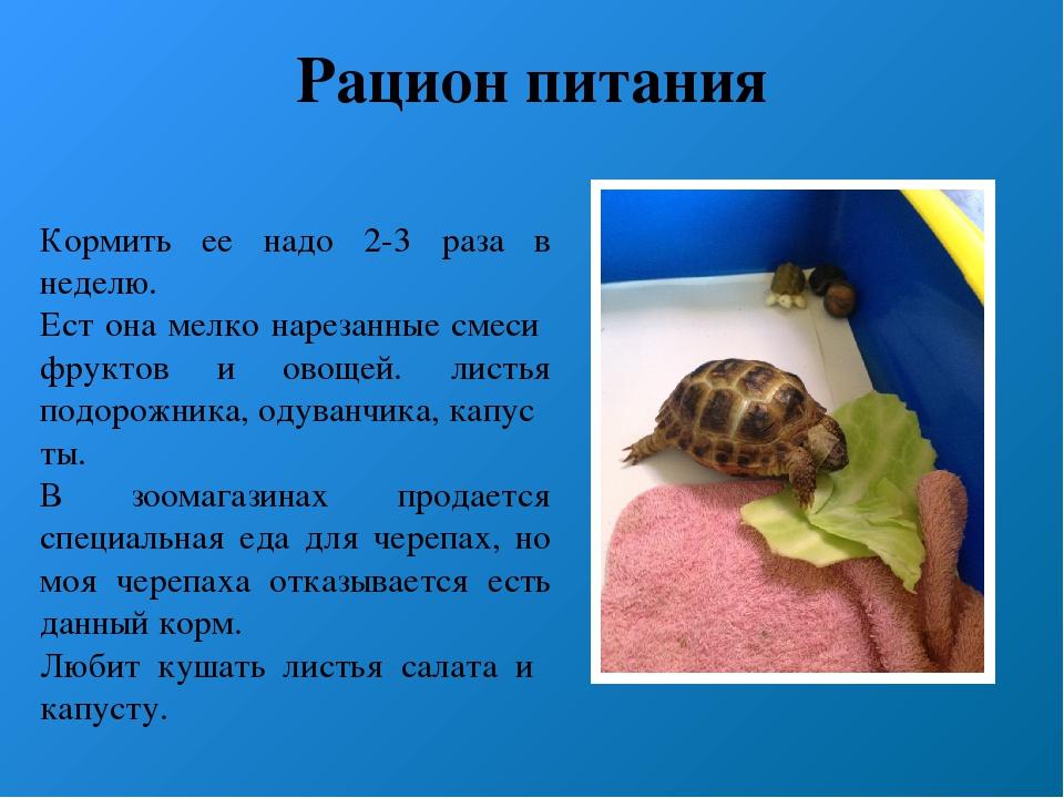 Как часто нужно кормить черепах? чем опасен перекорм?