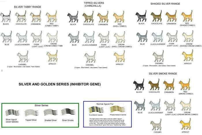 Имена и клички для котов-мальчиков и кошек-девочек