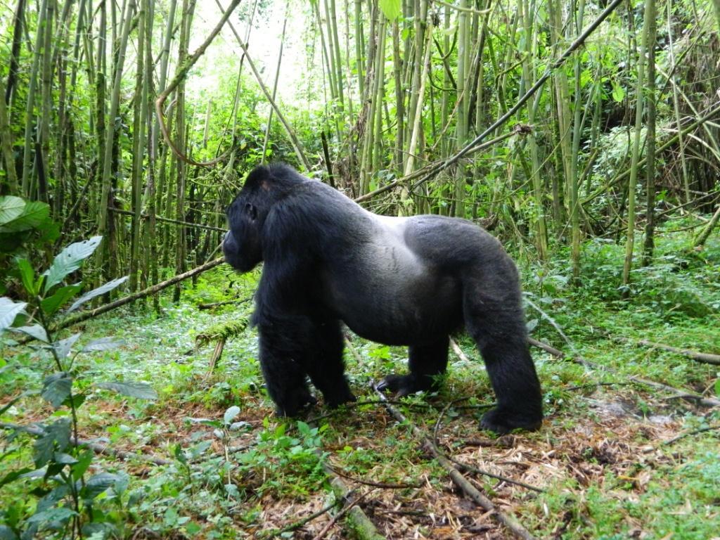 Дикобраз: описание, виды, где живет, чем питается, повадки и образ жизни   планета животных