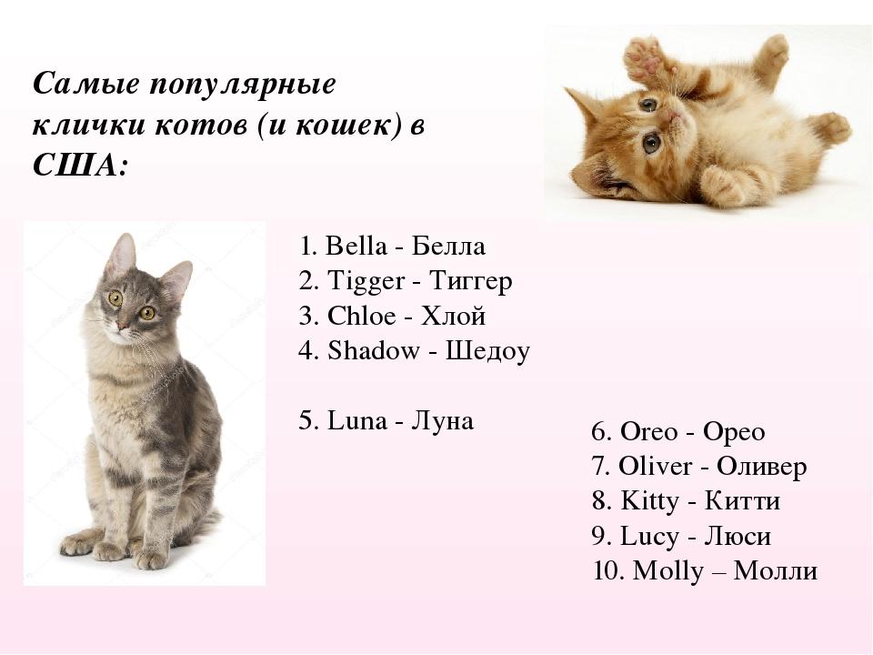 Как назвать британскую кошку девочку и мальчика: 706 смешных имён на 2021 год