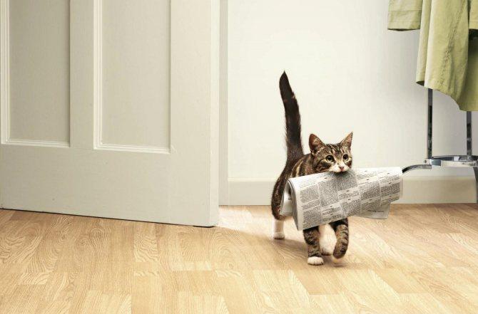 Как научить кошку приносить игрушечную мышь: 10 шагов