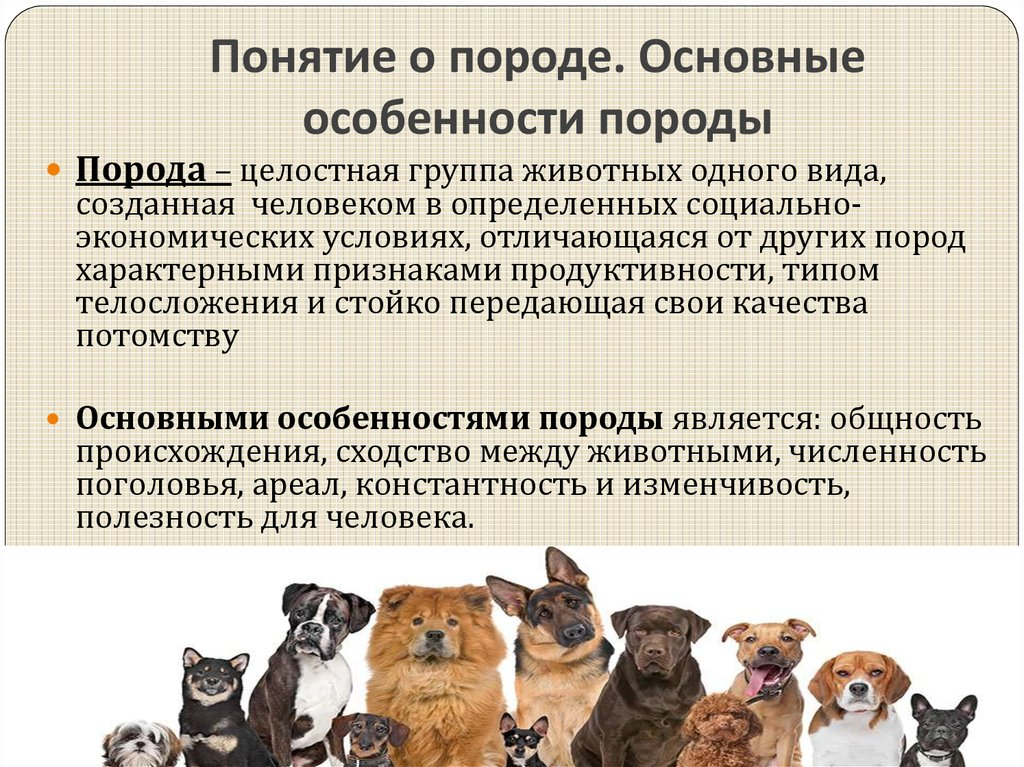 Бостон-терьер собака. описание, особенности, виды, цена и уход за породой