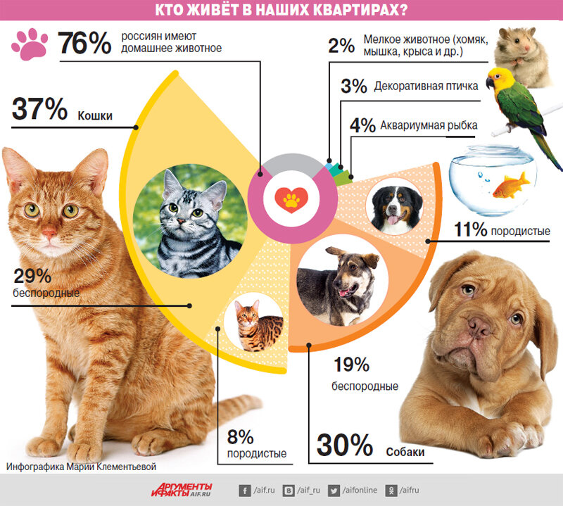 Кого лучше выбрать кота или кошку шотландской породы