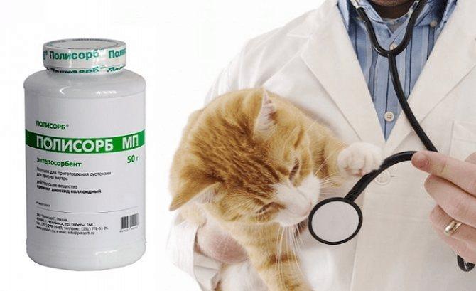Отравление у кошек и котов: симптомы и лечение в домашних условиях, чем лечить котенка