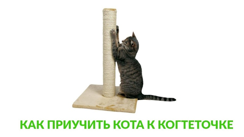 Как отучить кошку или котенка драть когтями обои и мебель: что делать, процесс воспитания