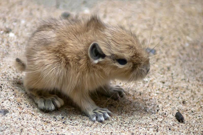Какие животные обитают в пустыни — названия, фото и характеристика