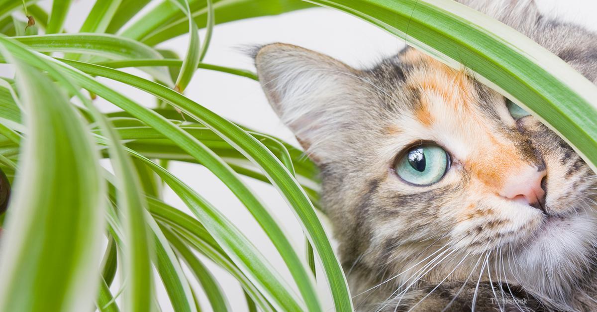 5 причин, по которым кошки едят траву
