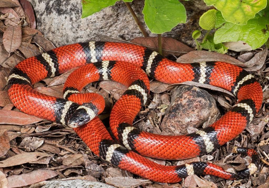 Как содержать змей дома? краткое руководство