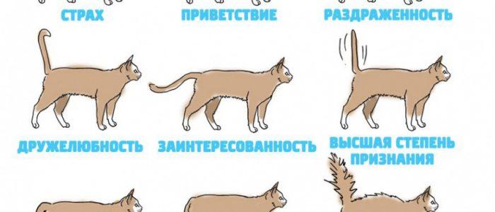 Власоеды у кошек: виды, симптомы и лечение - как избавиться от власоедов у кота - kupipet.ru